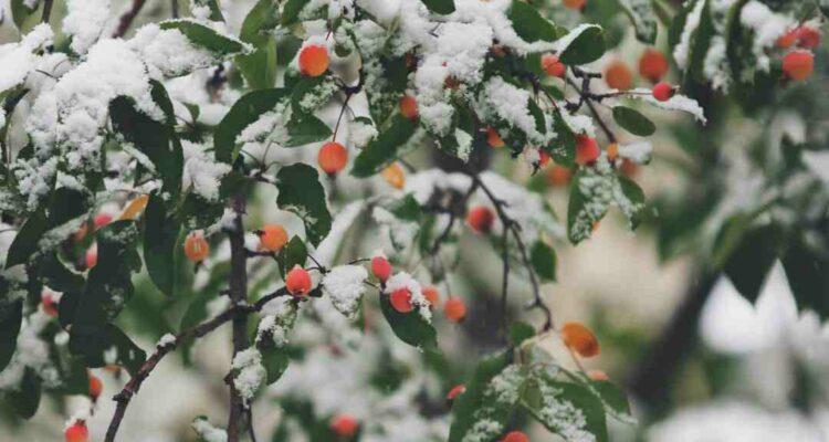 Wie du dein Hochbeet auch im Winter nutzen kannst
