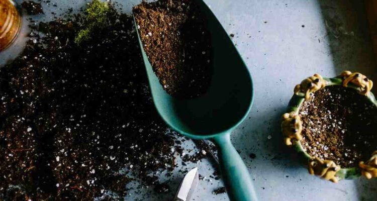 Gartenwerkzeuge desinfizieren