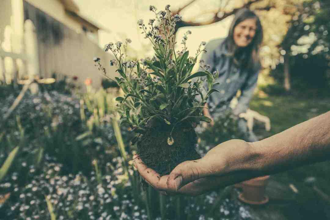 Wie werden Gartengeräte vor Rost geschützt?